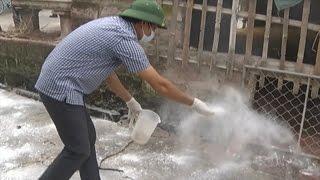 Tin Tức 24h Mới Nhất: Phòng chống dịch cúm gia cầm ở Nam Định