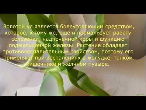Чай имбирем от гипертонии