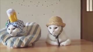 Классные приколы про животных  Смешная подборка с котами и кошками  Самые смешные видео