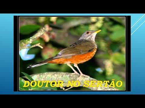 Música Doutor do Sertão