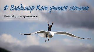 © Владимир Кот учится летать - Разговор со зрителем | © Vladimir Cat learns to fly