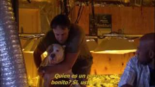 Weeds 2x07 Funny Dog Moment