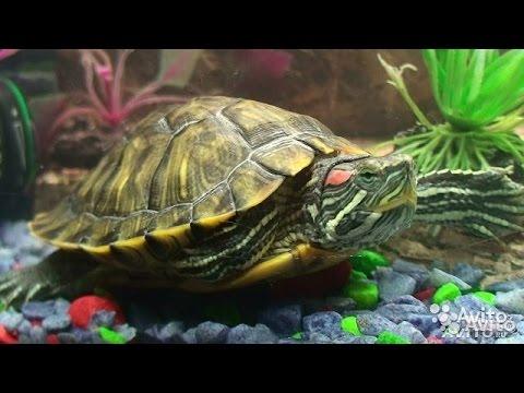 У черепахи отекли глаза и она не ест