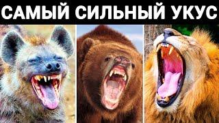 У Этих Животных Самый Сильный Укус на Земле