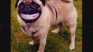 fotos graciosas de perros XD