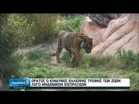 Αττικό Ζωολογικό Πάρκο: Ορατός ο κίνδυνος έλλειψης τροφής για τα ζώα   20/04/2020   ΕΡΤ