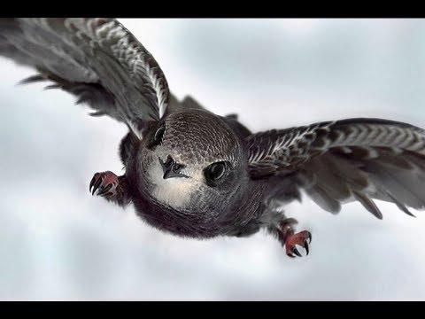 Самые быстрые птицы. ТОП - 5.