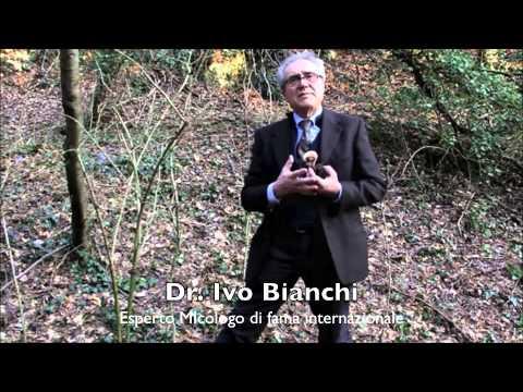 Storia di trattamento di un fungo di unghie
