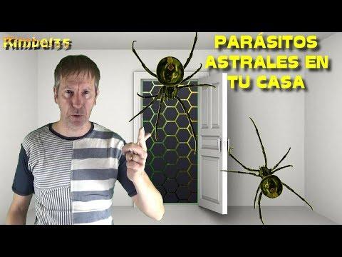 Helikobakterii es al parásito