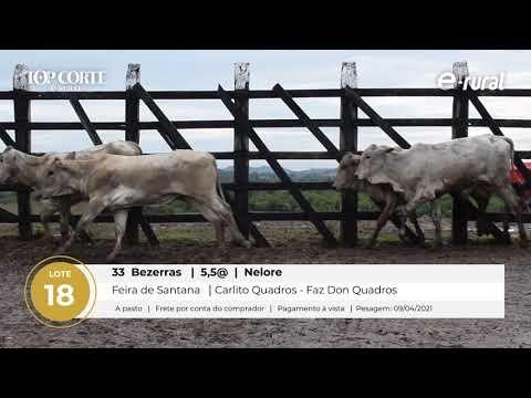 33 BEZERRAS NELORE