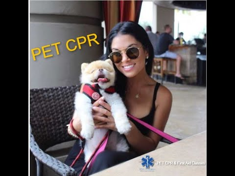 Best PET cpr and first aid class. Learn steps to save your Dog or Cat ...