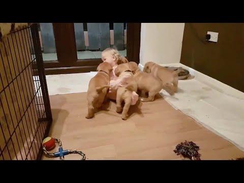 Милота дня: малышка и семеро щенков