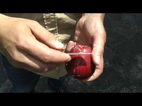 Muscoli dellarticolazione temporo-mandibolare