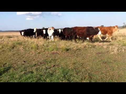 Brutonvale-Farley Alf