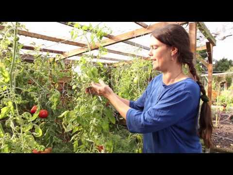 3 Tomatenhaus: Vorteile & Tipps zum Selbstbauen