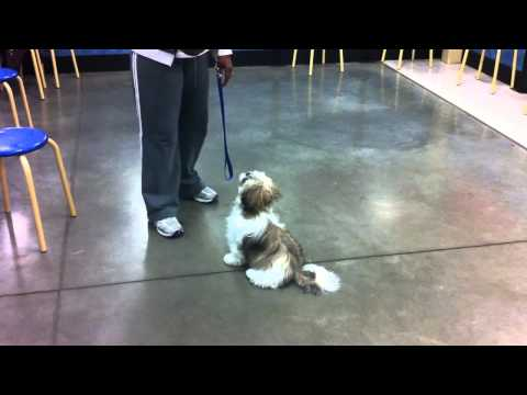 Terrific Dogs Presents: Sarah Training Sample 1
