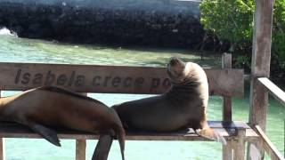 preview picture of video 'Dock in Puerto Villamil, Isabela Island, Galapagos'