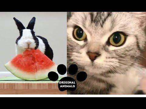 Original Animals #12. CUTE AND FUNNY ANIMALS VIDEO/ МИЛЫЕ И СМЕШНЫЕ ЖИВОТНЫЕ.