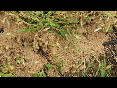 Digger Bees Scare Homeowner and Grandkids in Middletown, NJ