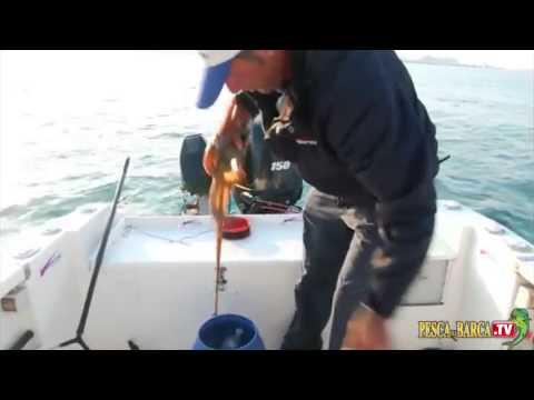 Che pesca è utile per il bambino
