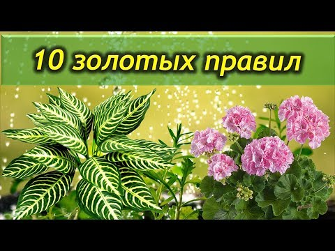 10 золотых правил ухода за комнатными растениями. Это должен знать каждый цветовод.