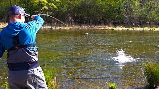 Fly Fishing For BIG Rainbow Trout In A Shallow River