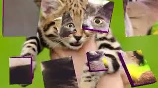 Самые прикольные кошки Эти глаза напротив.