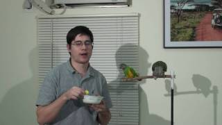 Getting Parrots to Eat New Foods