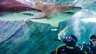 SWIMMING IN A TANK FULL OF SHARKS! w/ Sam, Colby & Corey