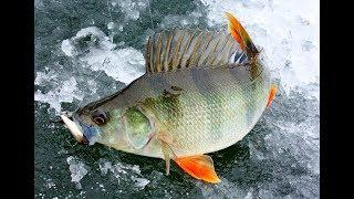 Зимняя рыбалка на блесна и балансиры