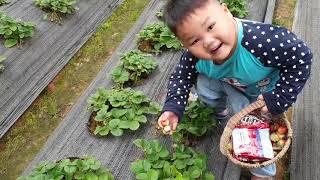 Trò Chơi Bé Vui Tham Quan Vườn Dâu ❤ ChiChi ToysReview TV ❤ Đồ Chơi Trẻ Em Baby Doli Bài Hát Vần Thơ