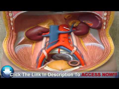 Video Detecting Kidney Disease: Stage Five