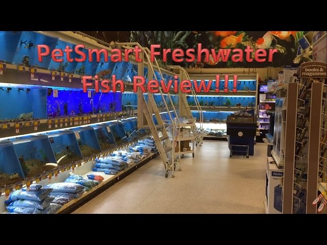 PetSmart Freshwater Fish Review