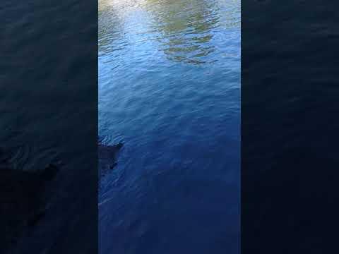 fishing Iowa River, big one got away