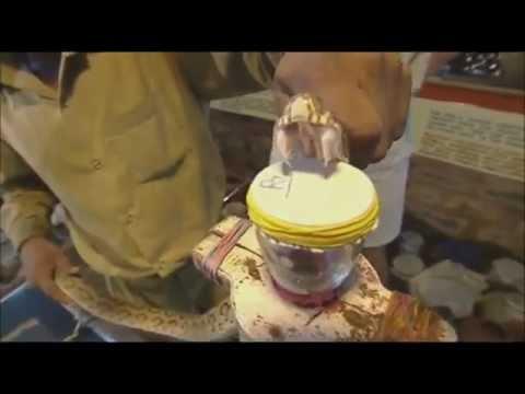 La crème des rides pour la peau autour des yeux avec leffet instantané tov camellia