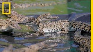 The Border Between Crocs and Humans   Explorer