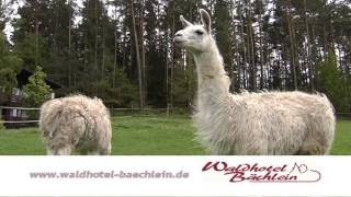 preview picture of video 'kurzer Spot Waldhotel Bächlein'