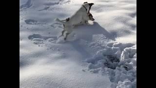Danzando a caccia nella neve
