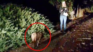 Did a Mountain Lion Just Photobomb This Reporter's Live Shot?