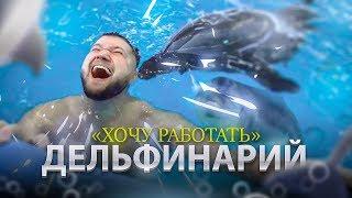 Дельфины лечат людей! Хочу работать в дельфинарии | Дельфинотерапия