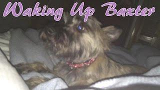 Waking Up Baxter