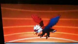 Braviary  - (Pokémon) - Pokemon Black and White - Rufflet Evolves Into Braviary