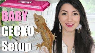 NEW Gargoyle Gecko | Setup And Care
