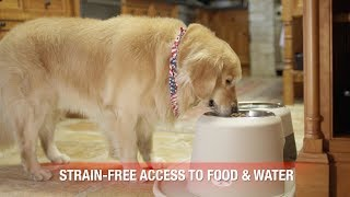 PetComfort Feeding System: Comprehensive Overview YouTube video