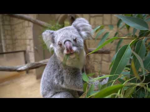 【東山動植物園公式】もふもふパラダイス:ホリーのごはん旅
