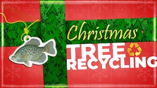 Watch Video - Recycle your natural Christmas Tree for Fish Habitat