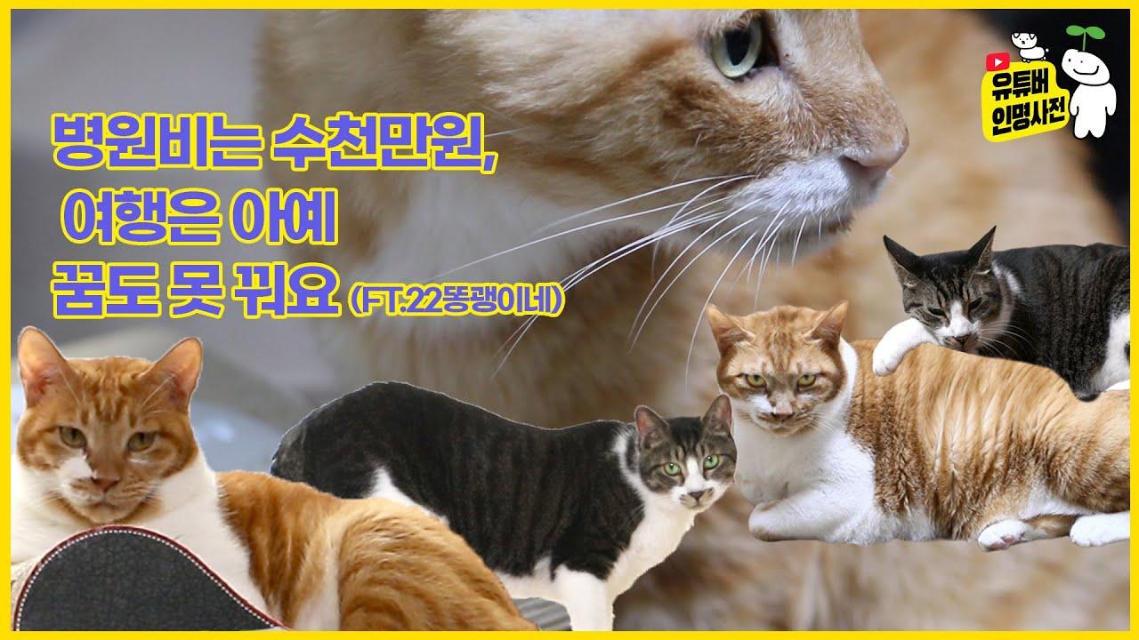 22마리 고양이와 함께 사는 똥괭이네 24시