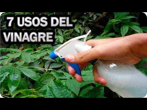 El ajo a las uñas del hongo