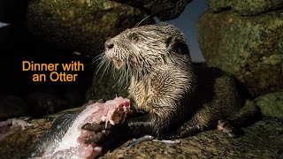 Dinner with an Otter