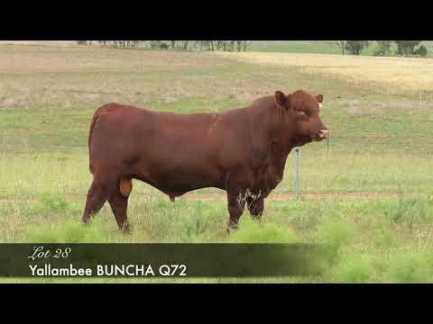 YALLAMBEE BUNCHA Q72 (MAF) (NHF) (OSF) YRAQ72